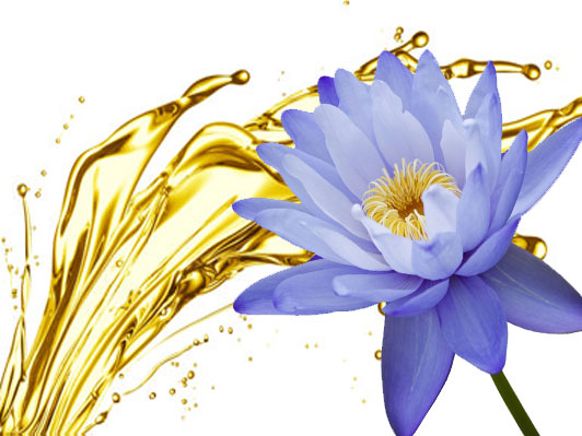 Sacred Blue Lotus Skin Care Of The Ancients Bare Beauty Essentials