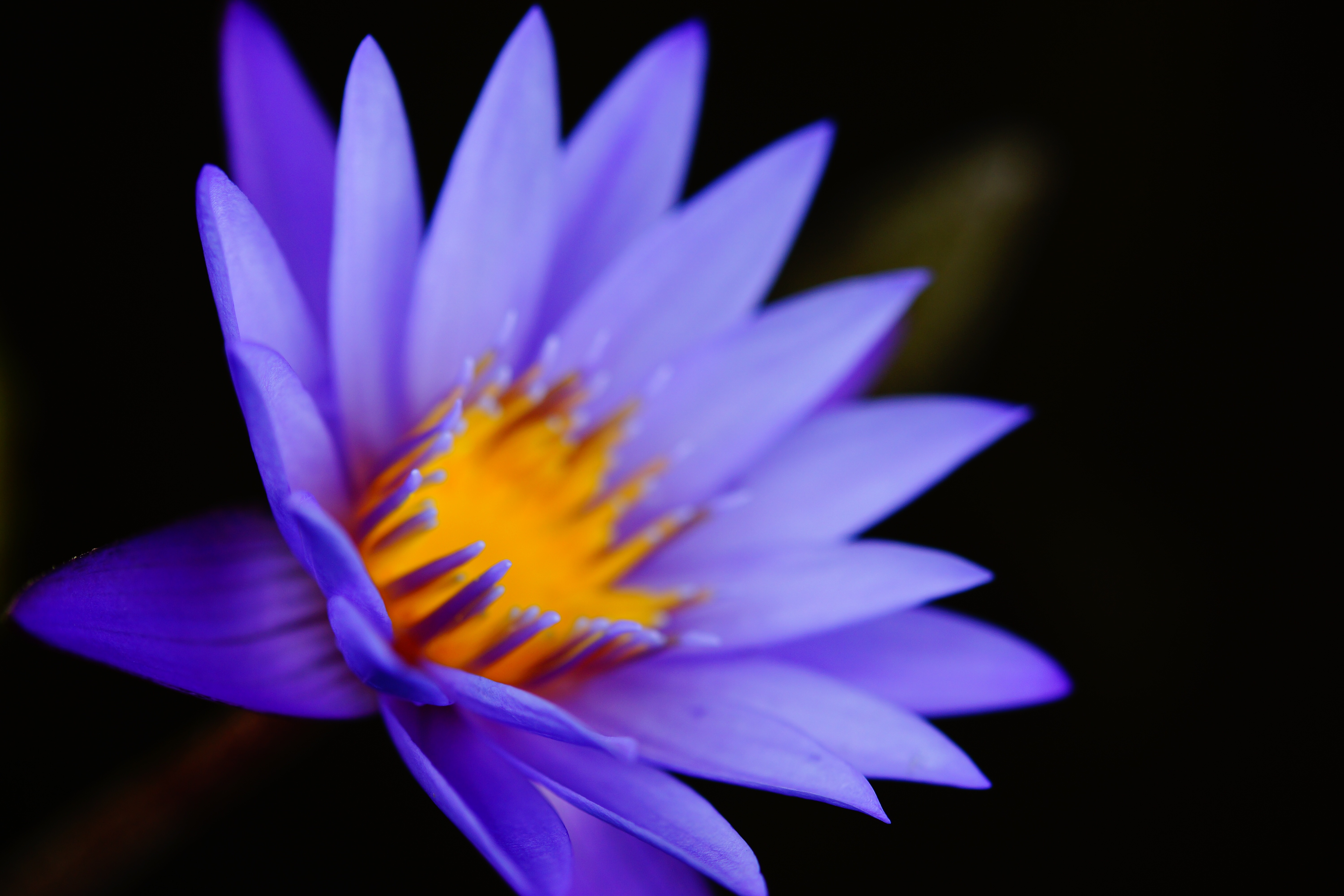 Sacred Blue Lotus – Skin Care of the Ancients